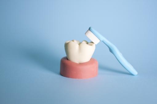 歯磨きをしない